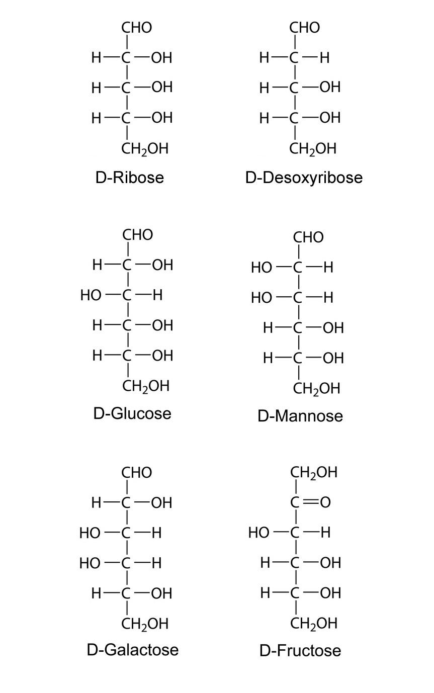 Zucker Und Seine Erscheinungsformen Das Wissensportal Für
