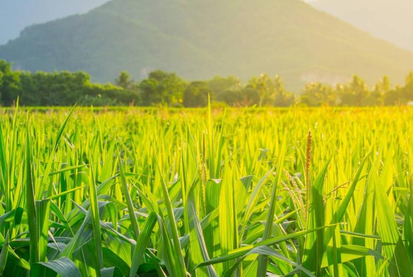 High-Fructose-Corn-Syrup und seine Auswirkungen bei Fructoseintoleranz
