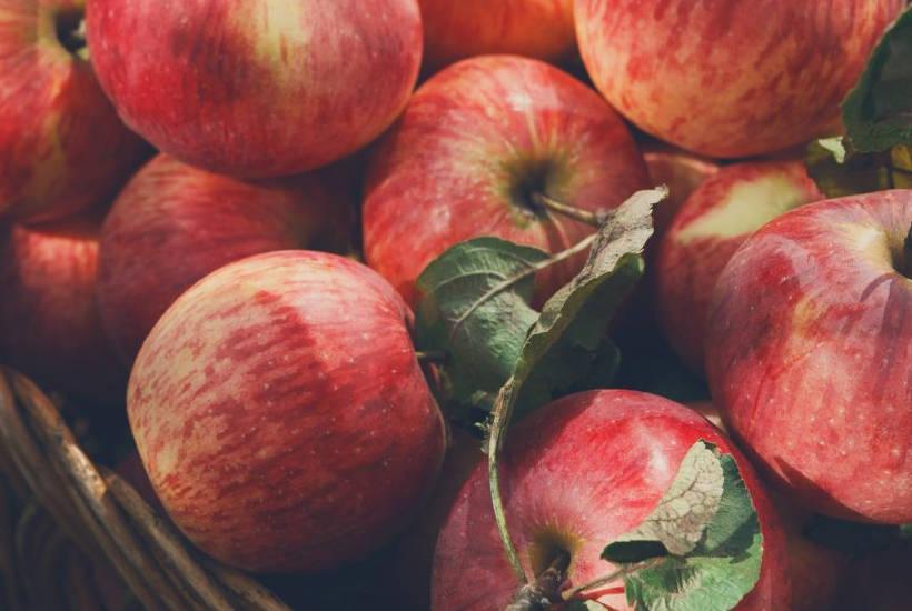 Äpfel enthalten meist viel Fructose